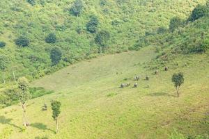 landbouwgrond en vee foto