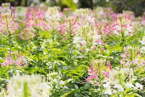 bloemen in de tuin foto