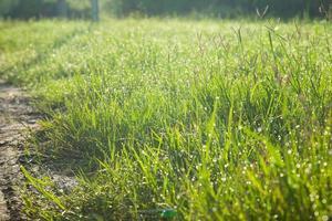 gras op het veld