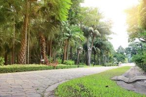 palmbomen in de tuin