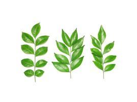 drie verschillende bladeren foto