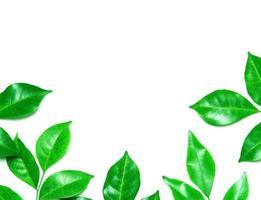 groene bladeren op witte achtergrond met kopie ruimte foto