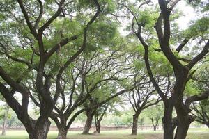 grote groene bomen foto