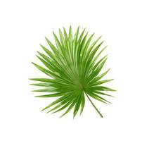 groene bladeren van palmboom geïsoleerd op een witte achtergrond foto