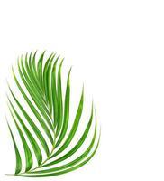 gebogen groen plantblad foto