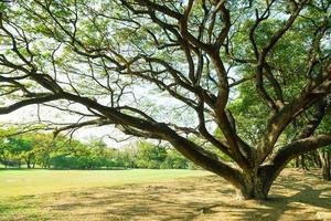 boom op het gazon