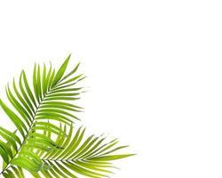 heldere tropische bladeren