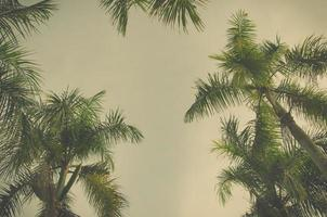 vintage bewerken op palmbomen