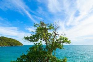 boom op de klif foto