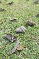 droge bladeren op het gazon foto