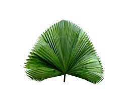 tropisch groen waait palmblad foto