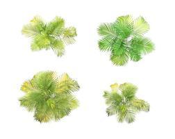 verzameling palmbomen foto