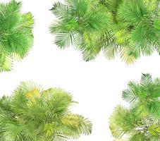 palmbomen op wit foto