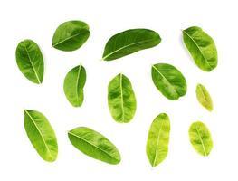 set van individuele groene bladeren