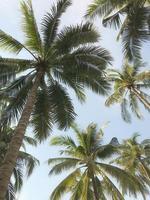 palmbomen en lucht