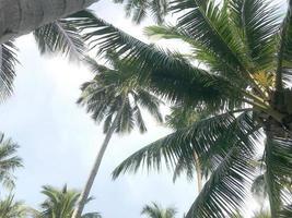 palmbomen in blauwe lucht