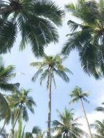 palmbomen gedurende de dag met blauwe lucht