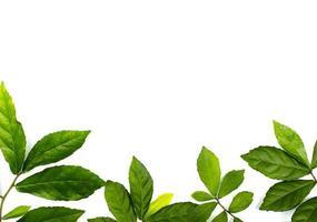 groep bladeren onderaan frame foto