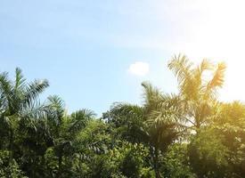 palmbomen en zonlicht