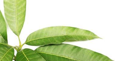 close-up van lange groene bladeren