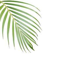 palmboom blad met kopie ruimte