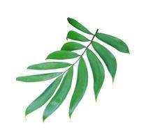 groen gebladerte geïsoleerd