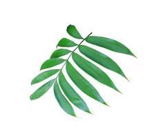 weelderige groene bladtak