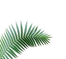 gebogen palmverlof met kopie ruimte