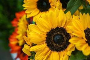 close-up van zonnebloemen foto