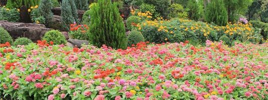 kleurrijke bloemen in de tuin foto