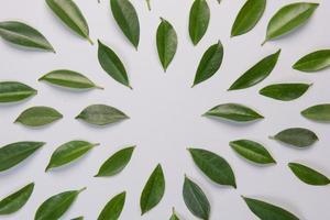 bladeren op witte achtergrond