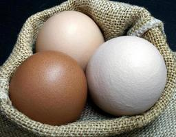 drie eieren in een zak foto