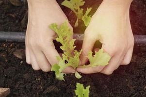 hand aanplant in boerderij foto