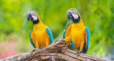 twee kleurrijke ara's gedurende de dag foto