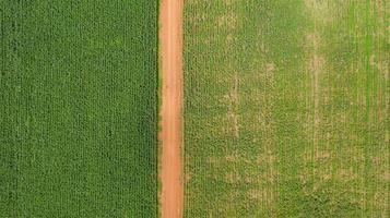 luchtfoto van maïsvelden foto