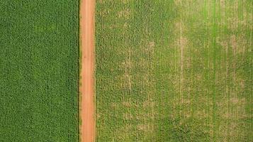 luchtfoto van een pad door een maïsveld foto
