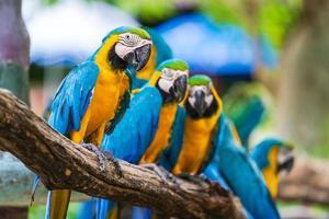 groep kleurrijke papegaaien foto