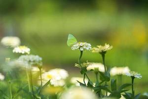 vlinder op een bloem in een tuin foto