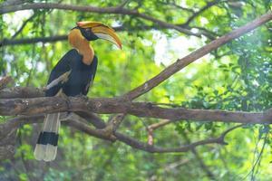 neushoornvogel vogel op boom