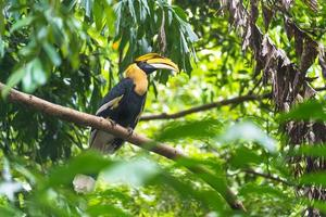 neushoornvogel vogel in een boom gedurende de dag