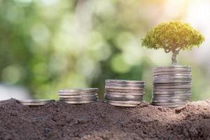 kleine boom groeit uit een stapel munten foto