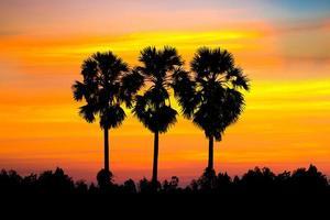 silhouet van suikerpalmen met rijstveld foto