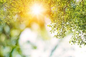 groene natuur achtergrond met zon schijnen foto