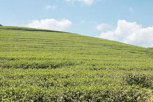 gras heuvelachtig veld foto