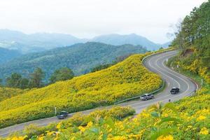 gele bloemen en een weg foto
