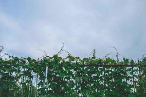 bladeren op een hek foto