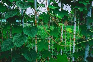 groene bladeren op een metalen hek foto