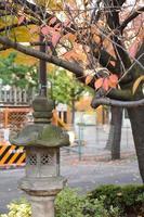stenen lamp onder de boom