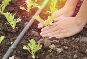 hand planten in de tuin foto