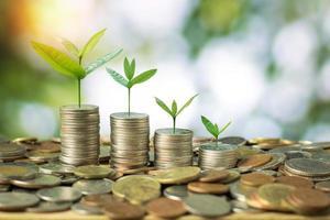 jong boompje opgroeien op gestapelde geldmunten foto